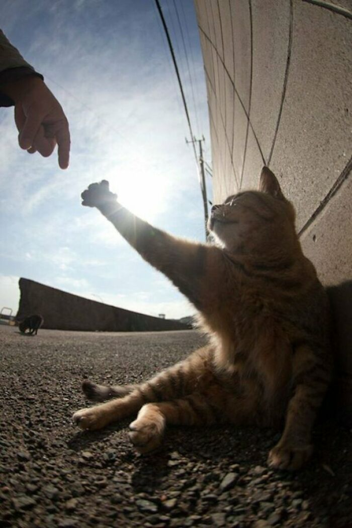 The Creation Of Internets