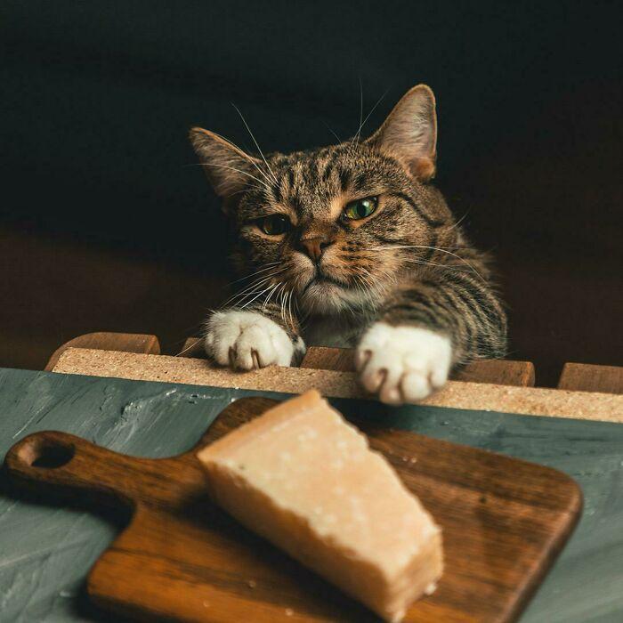 Nuestro gato intentando robar queso
