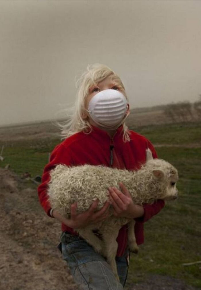 A Little Girl Carrying A Lamb To Shelter From Falling Ash During Iceland's 2010 Volcanic Eruption