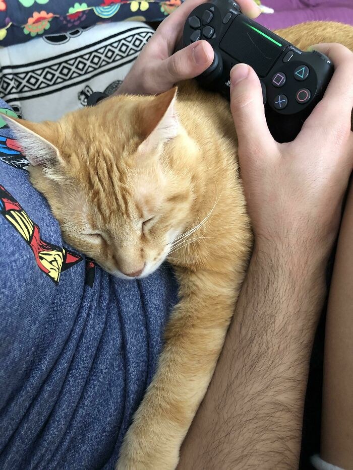 The Cat Is Sleeping While My Boyfriend Plays