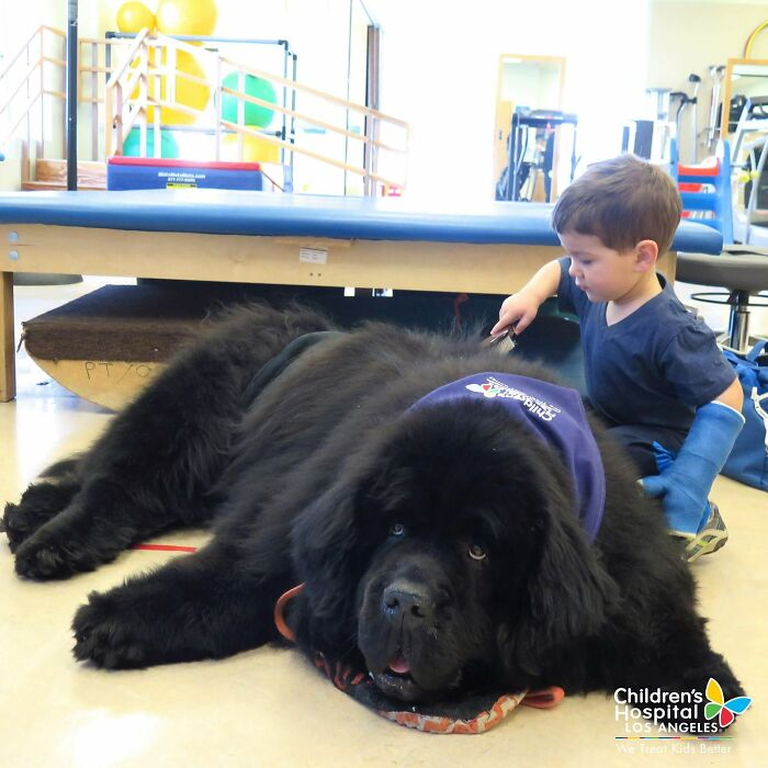 Bonner, Newfoundland, Can Often Be Spotted In Our Rehabiliation Unit Encouraging Patients