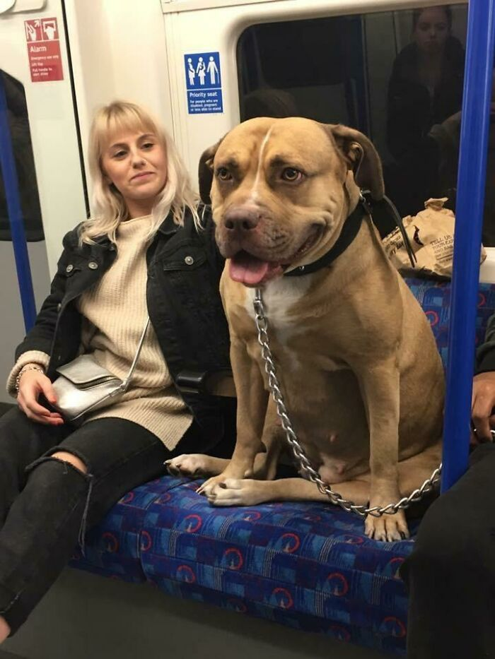 Ridiculously Massive Doggo Spotted On The Underground