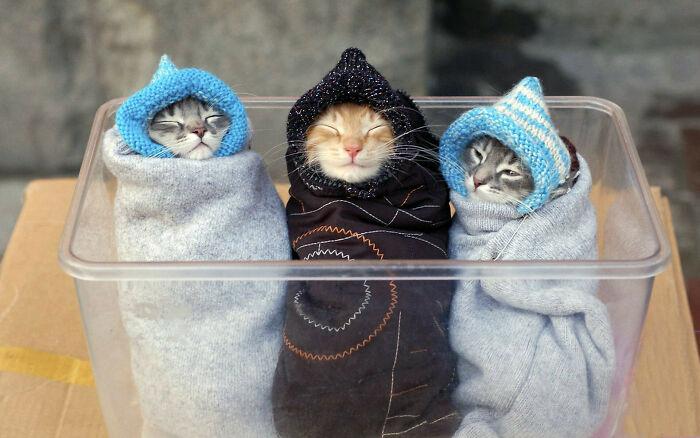Bundled Sleepy Kittens