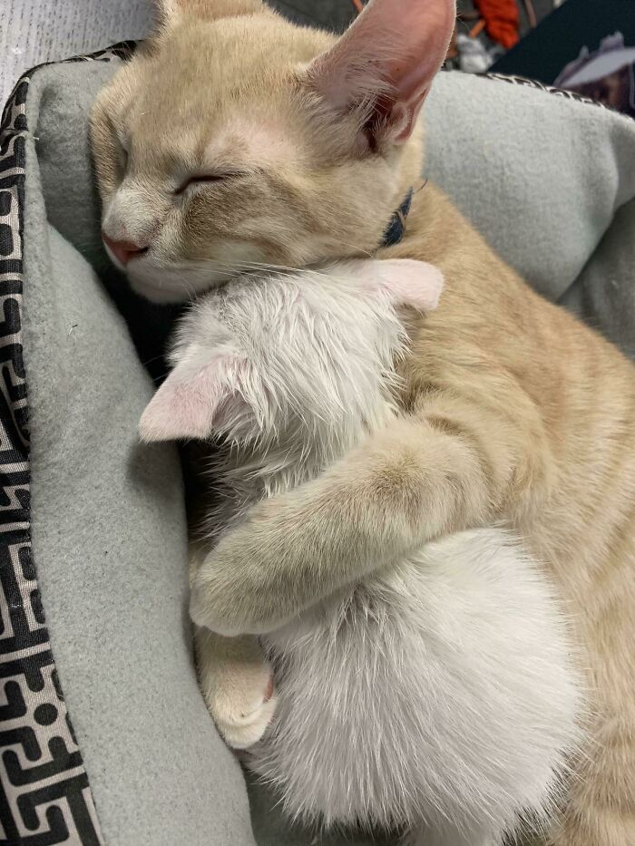 The Time I Rescued A Crying Kitten Outside. My Cat Cuddled Her