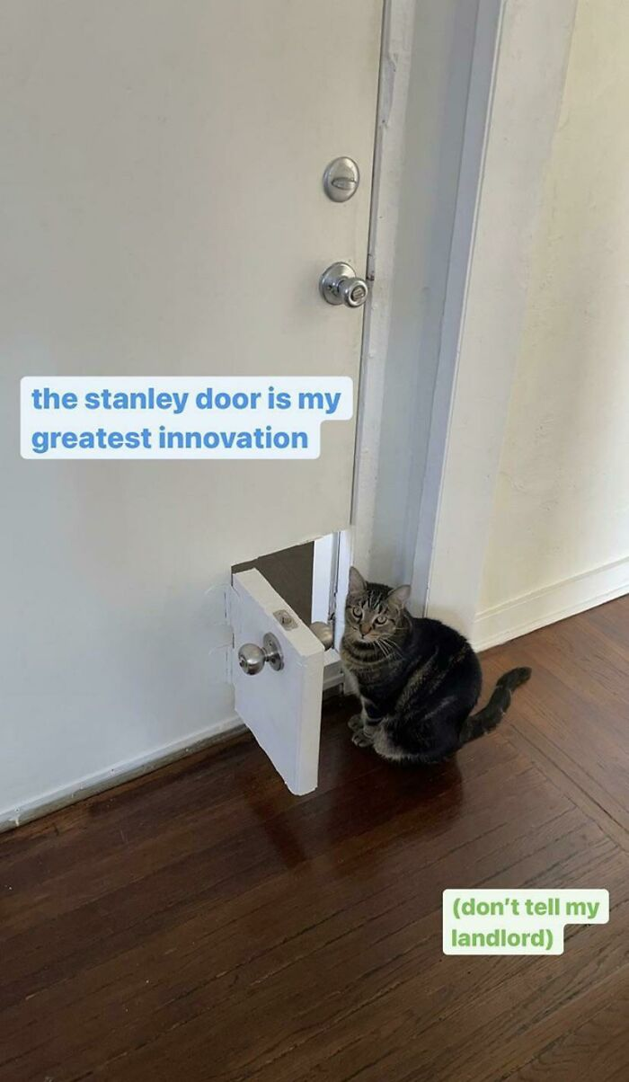 This Guy Built A Mini-Door Complete With Doorknob Into The Front Door At The Place He's Renting, For His Cat Stanley