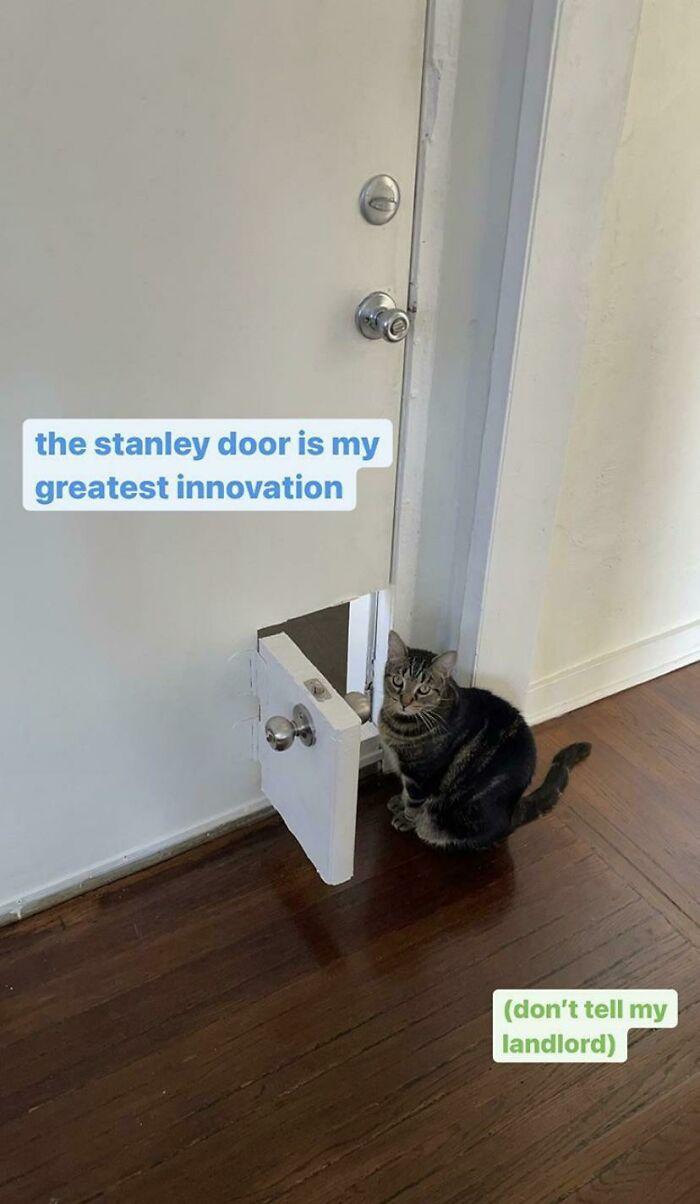 Minipuerta con picaporte y todo para el gato, en su piso alquilado