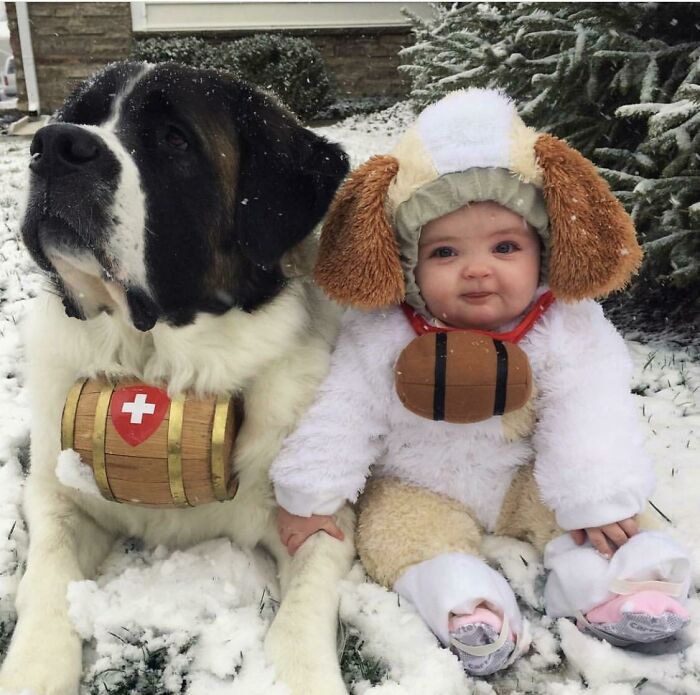 Our Daughter Who Is Now 3 And One Of Our Saint Bernards Who Is Now 9