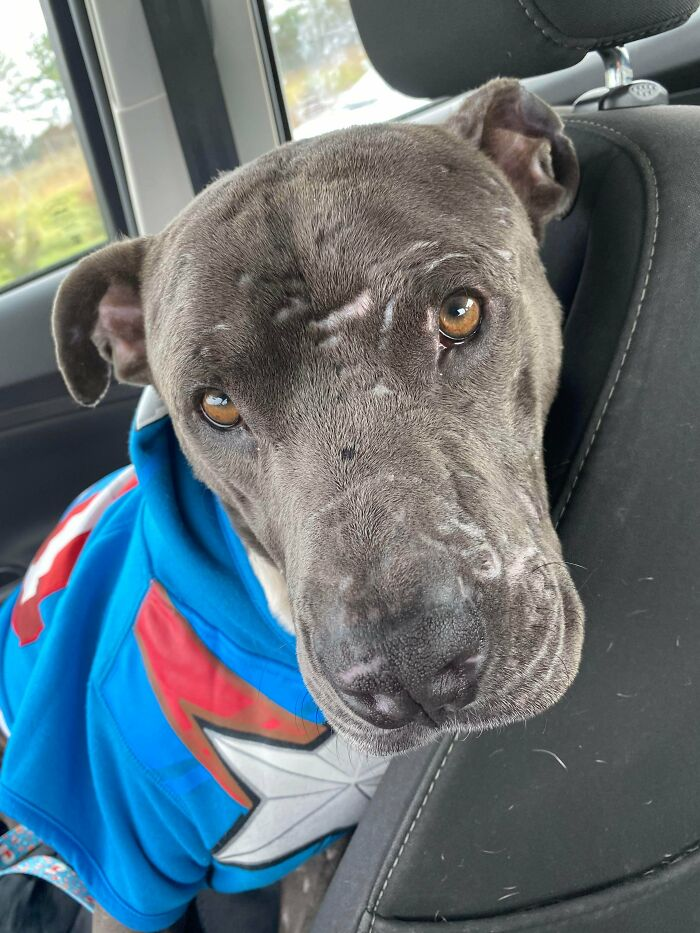 Rescued This Very Good Boy, Arnold!! He Looks So Handsome In His Sweater!!