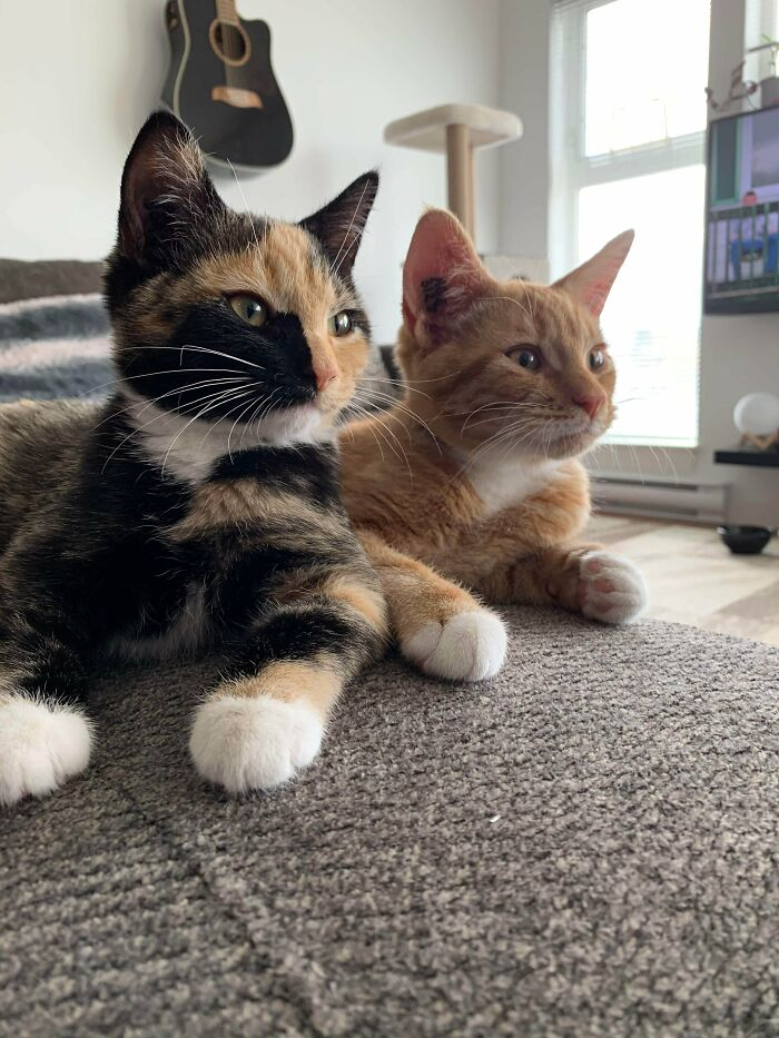 Just Adopted Both Of These Little Monsters