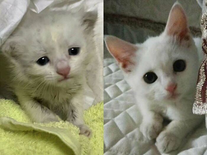 My Friend Adopted A Stray Cat Two Months Ago vs. Now