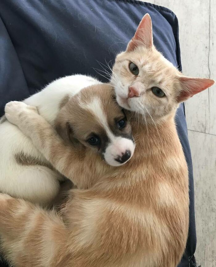 This Cat Adopted A Puppy