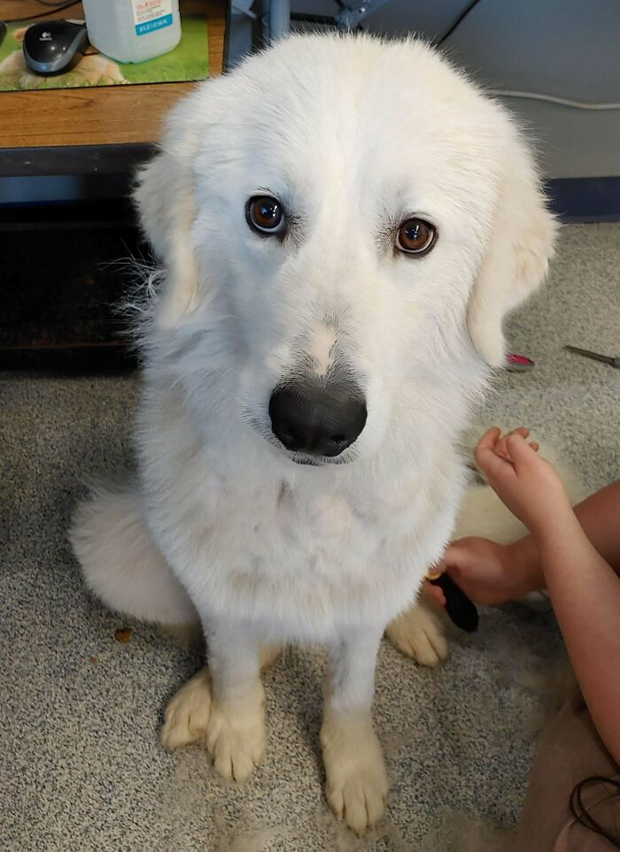 A Very Fluffy Good Boy That Got Adopted Yesterday