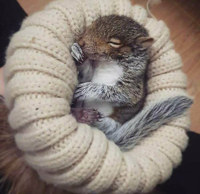 Baby Squirrel Found Alone In Apartment Loft Gets Adopted And Lives In A Cosy Hat, His Name Is Conker