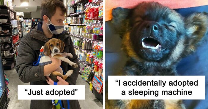Adopted Pets