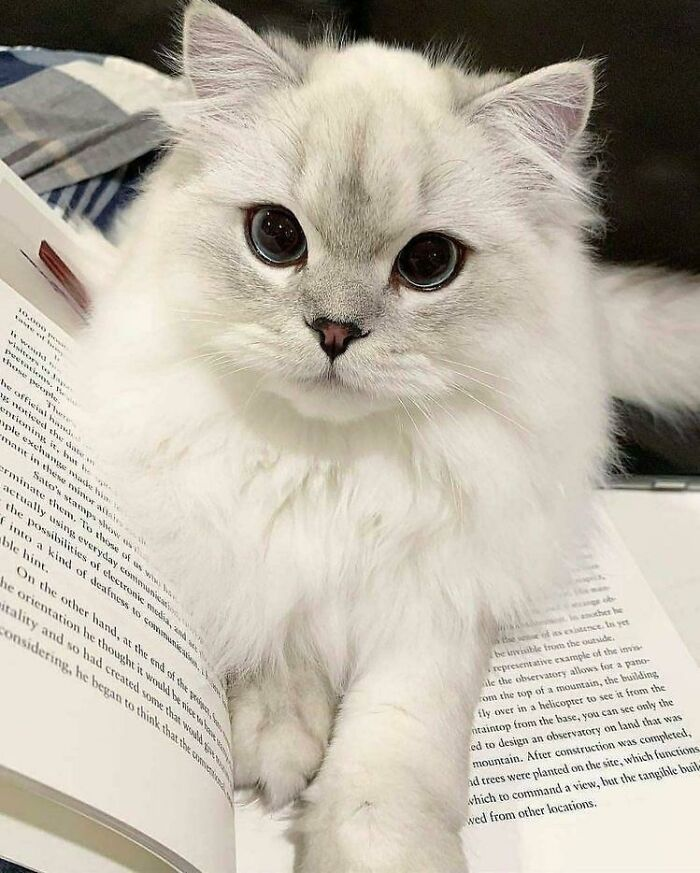 This Little Kitty Is Prettier Than Any Human Being I've Ever Seen