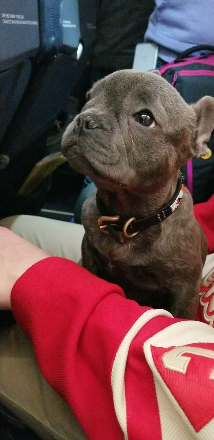 I Was Lucky Enough To Sit Next To This Little One On My Plane Ride The Other Night