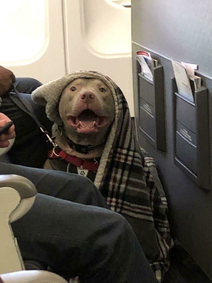 This Guy Is Going To Make The Flight Much More Enjoyable! He's So Happy To Fly