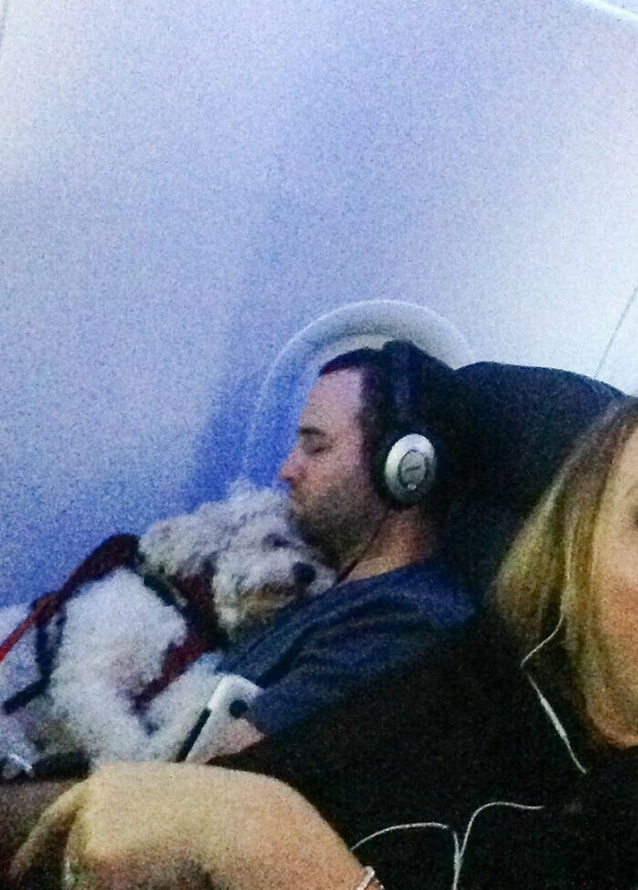 This Guy And His Dog On My Flight Right Now. They Have Been Like This For Over 2 Hours