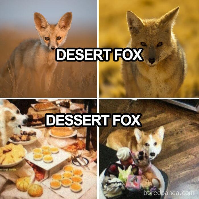 Dessert Fox!!!