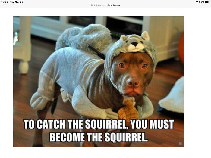 To Catch The Squirrel You Must Become The Squirrel