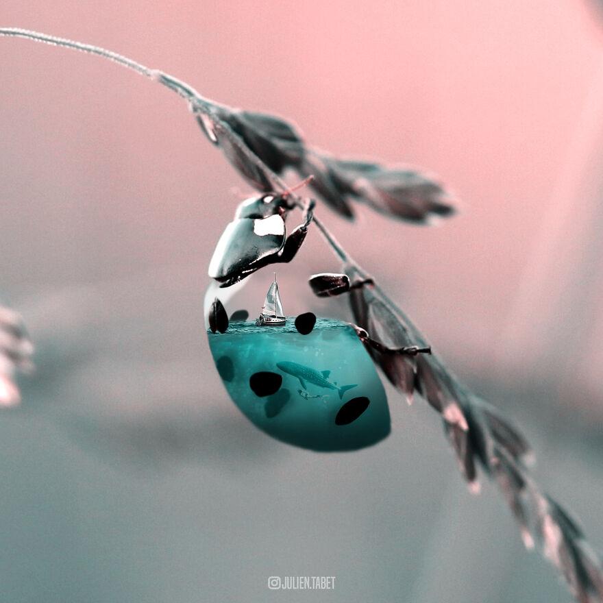 Aqualedybug