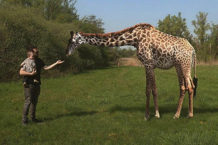 La fauna vuelve a los parques de Amberes