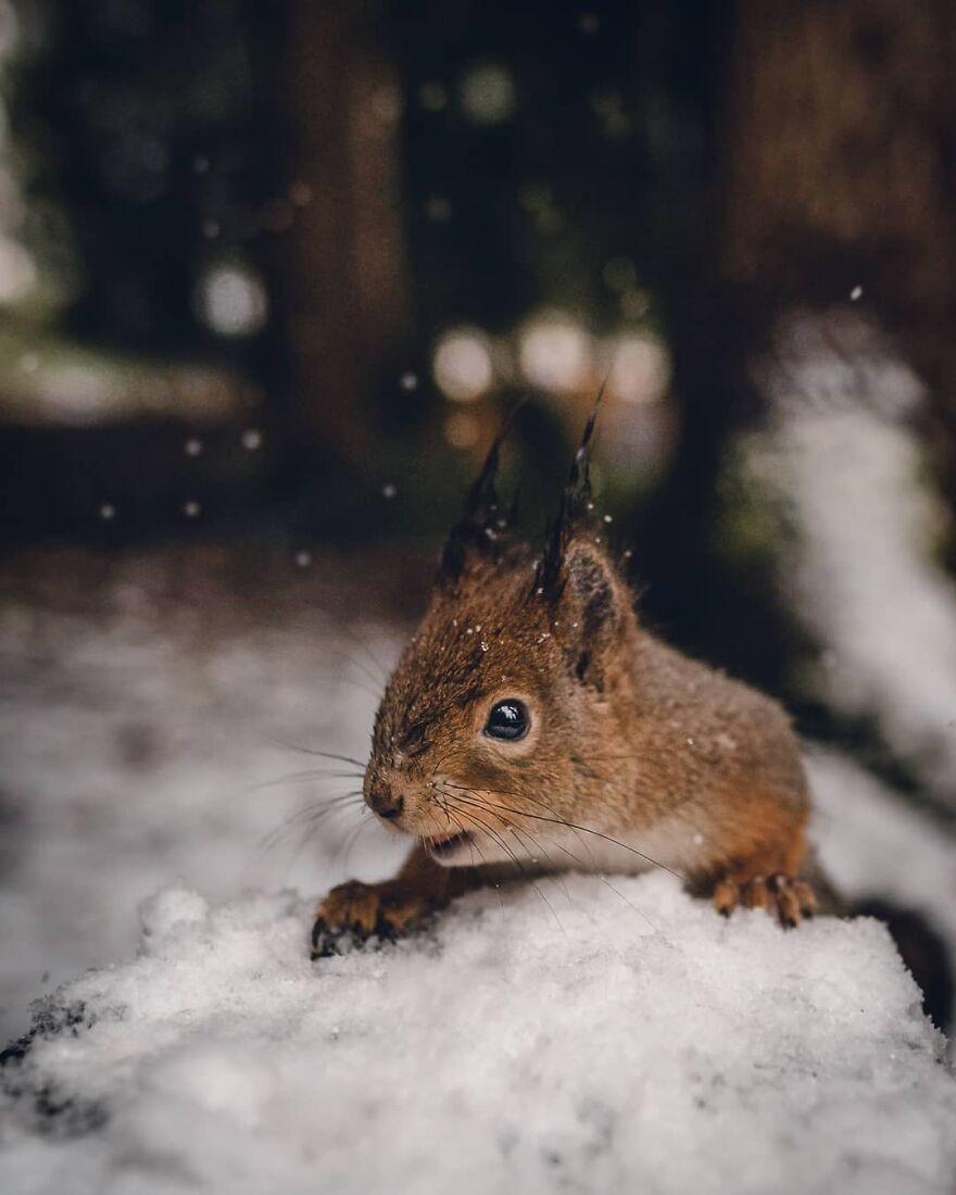 Light Snowfall Makes For Some Great Bokeh