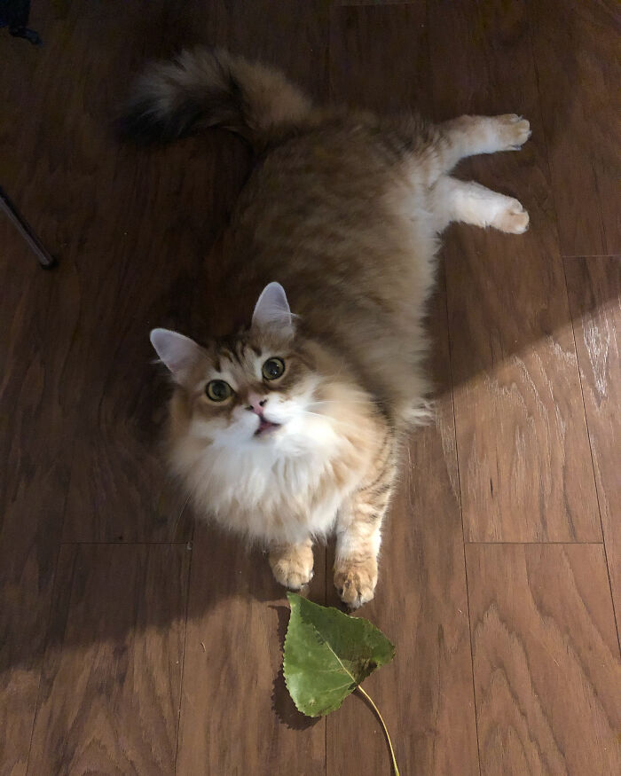 This Is Bumi The Leafhunter. He Brings Me Gifts Every Day, Preferably Leaves.
