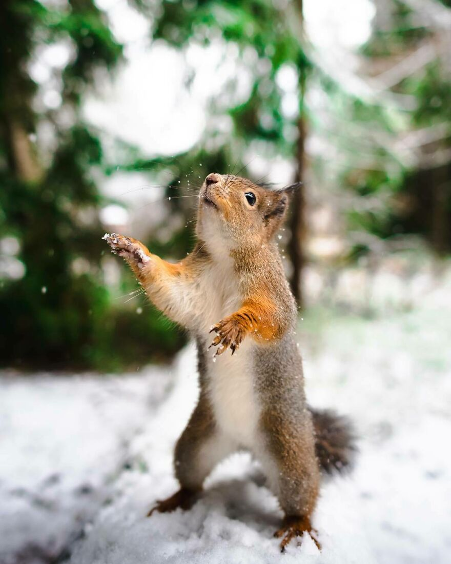 """Look Everyone! It's Finally Snowing!"""