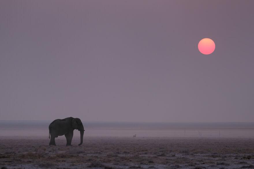 Elephant Sunset On Etosha Pan