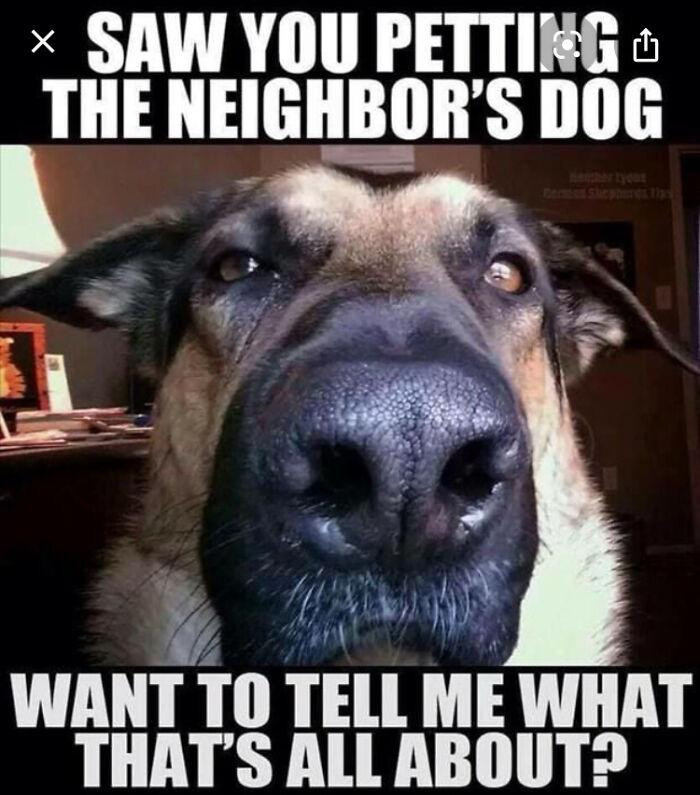 Every Dog Ever- 🤣