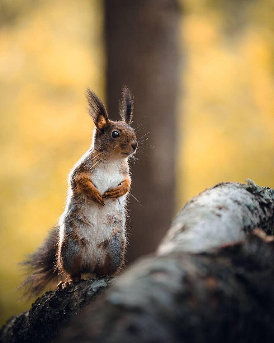 Squirrel Power