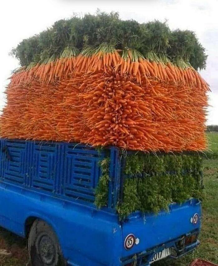 Veggitect