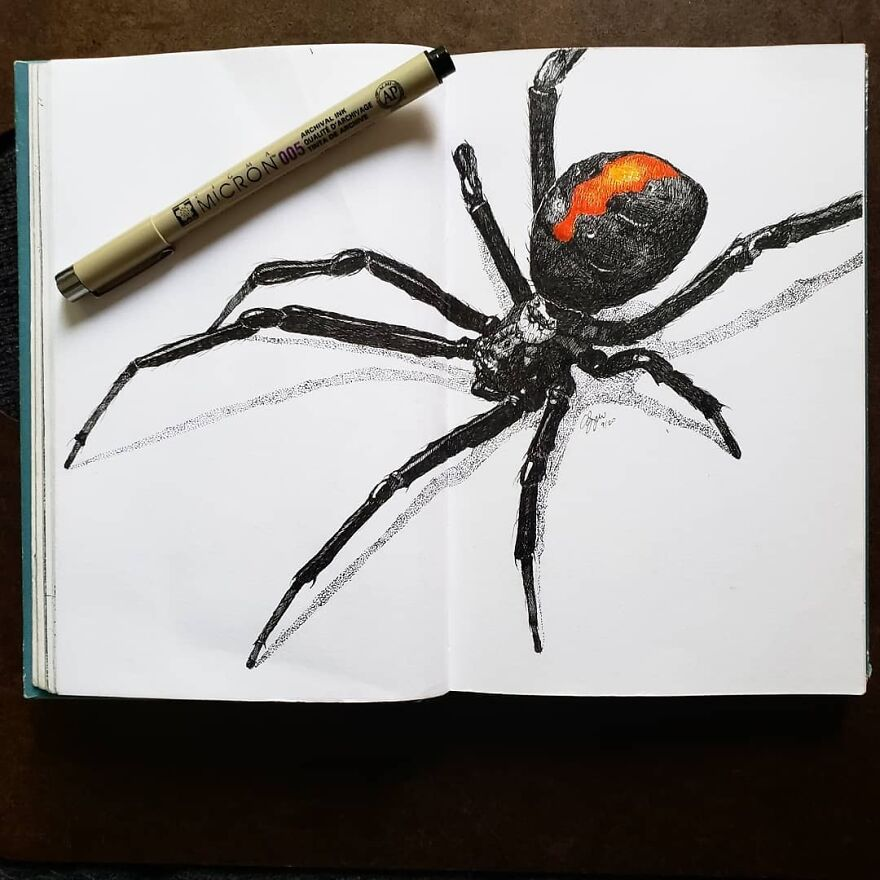 Spiders Are Amazing Creatures And I Never Get Tired Of Drawing Them