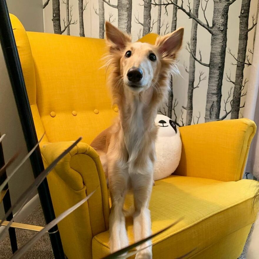 "Meet Cleo, The Dog Known As The ""Giraffe Dog"" That Is Enchanting The Internet"