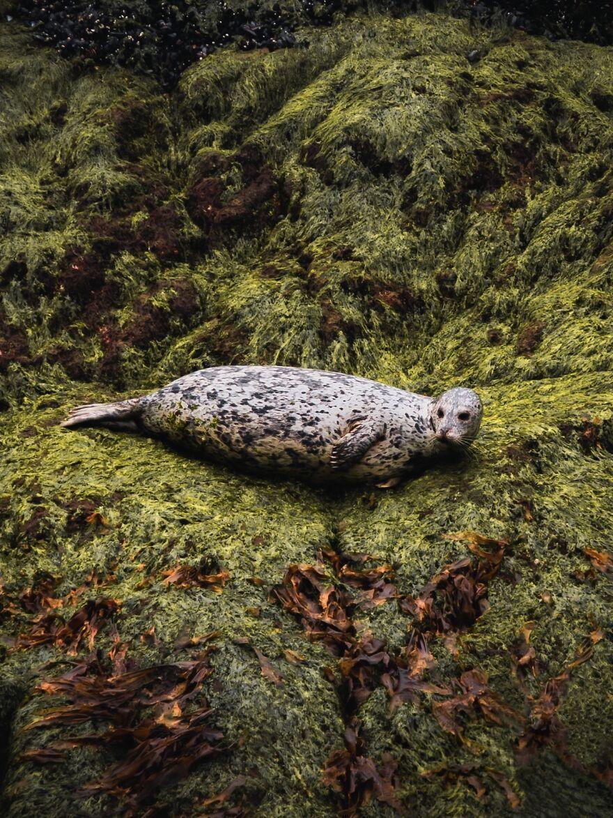 Curious Seal
