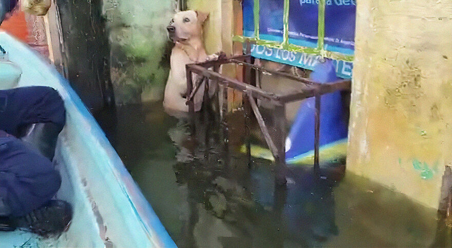 Dog Saved From Flood In Mexico, Gets Taken In By The Mexican Marines Who Saved Him 4