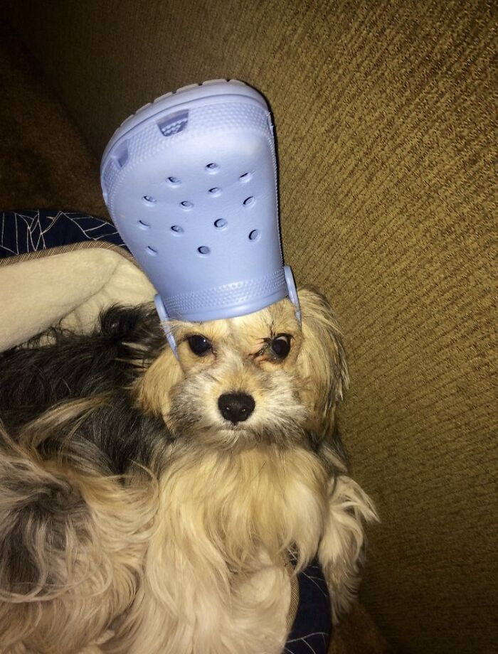 39 Pets Looking Like Popes With Slippers On Their Heads