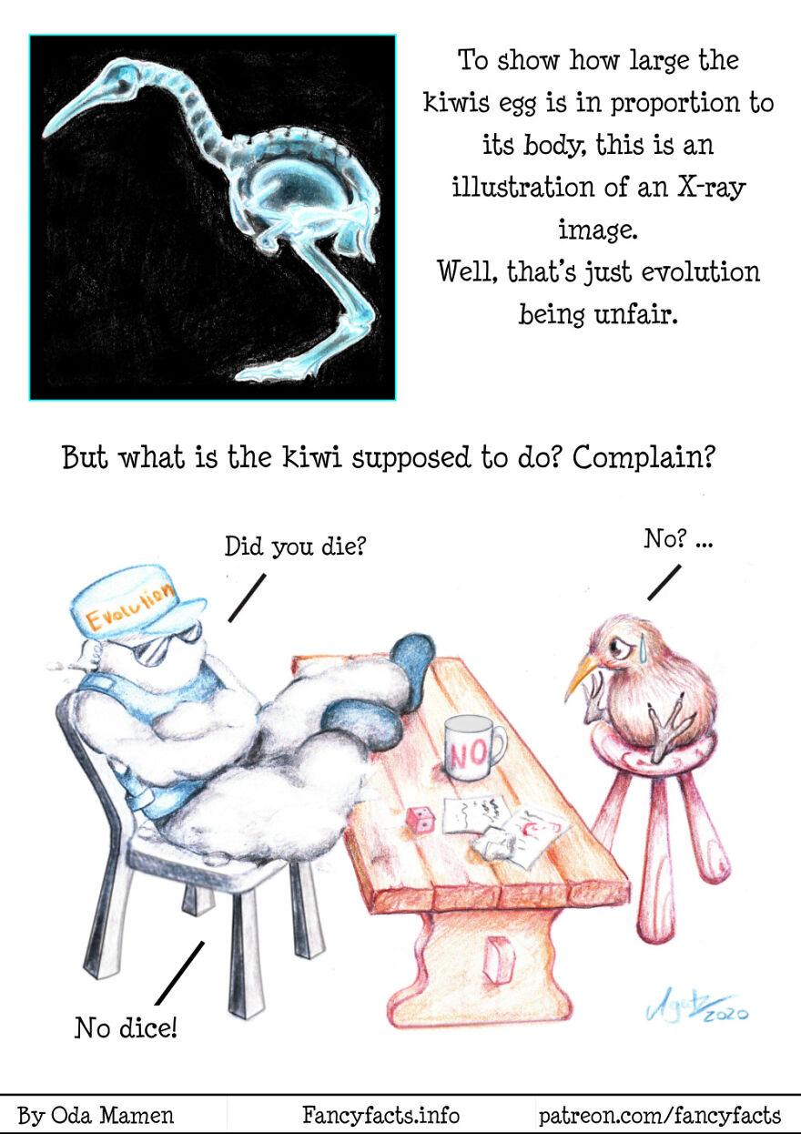 Kiwi Evolution