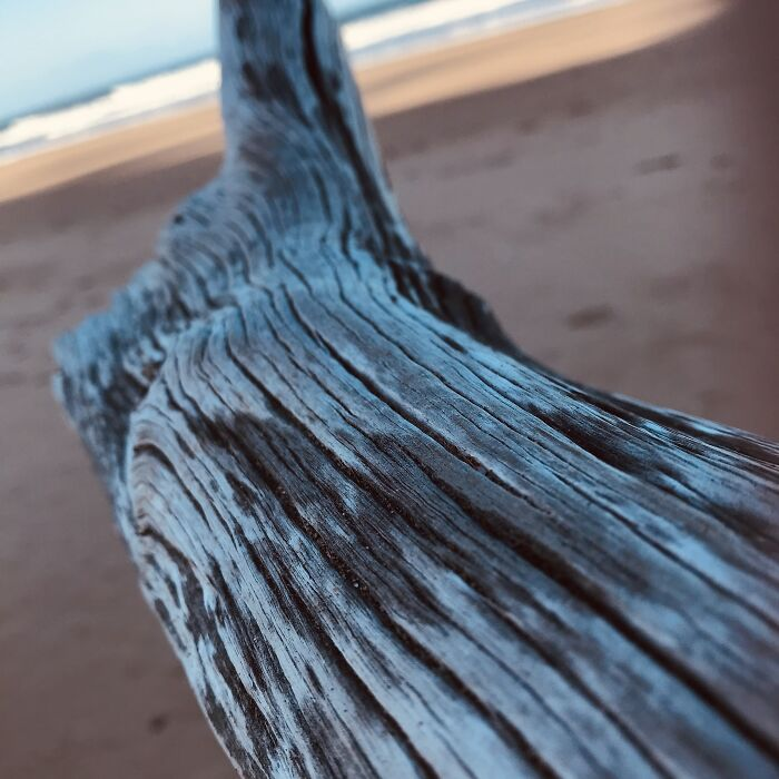Just A Piece Of Driftwood At The Beach