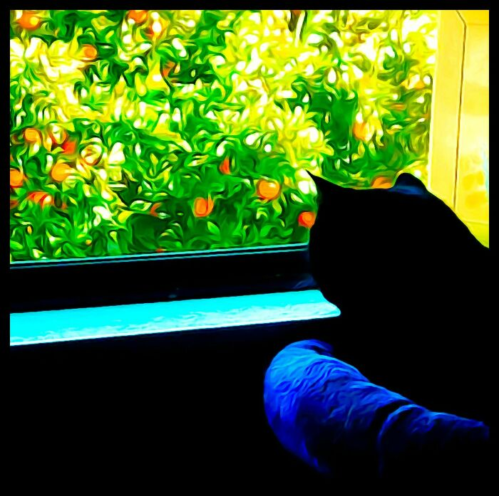 A Photo Painting Of My Cat Jiji Looking Outside At The Orange Tree