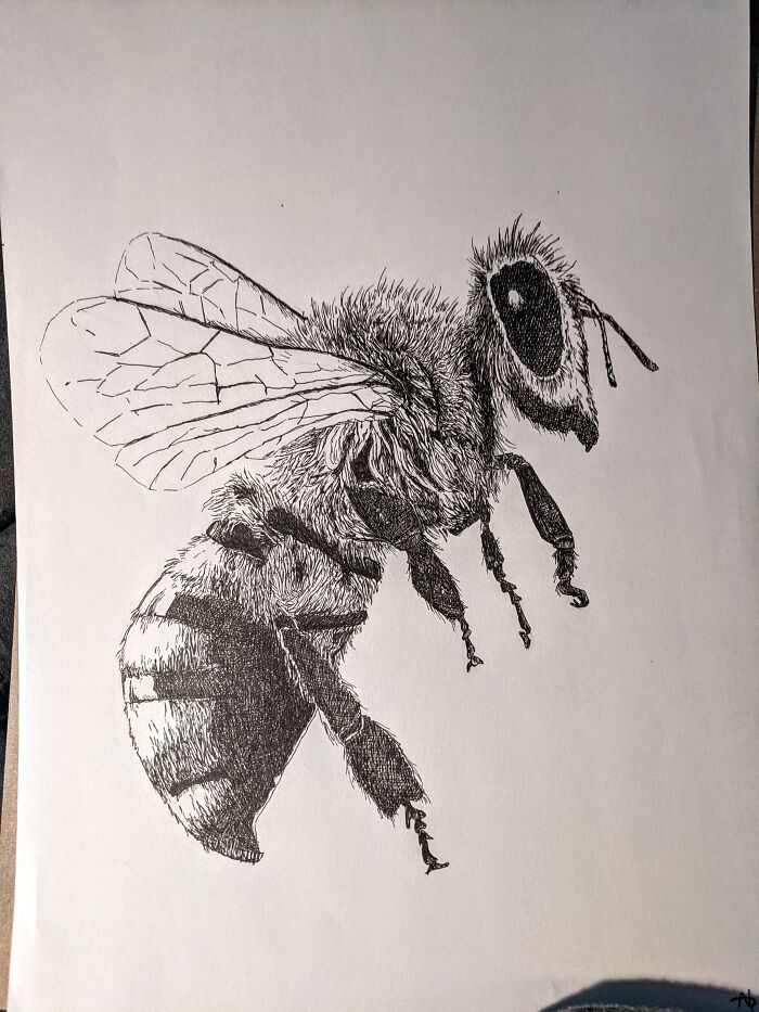 The Honey Bee I Drew When I Was 13