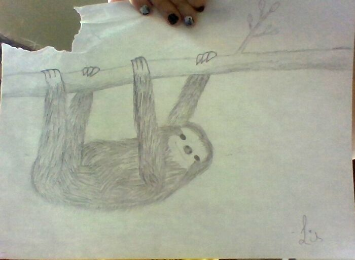 This Cute Little Sloth I Used A Tutorial To Draw :3 (It's Not Exactly The Same So I Guess You Could Say It's Original, But I Still Followed A Tutorial So Maybe Not)