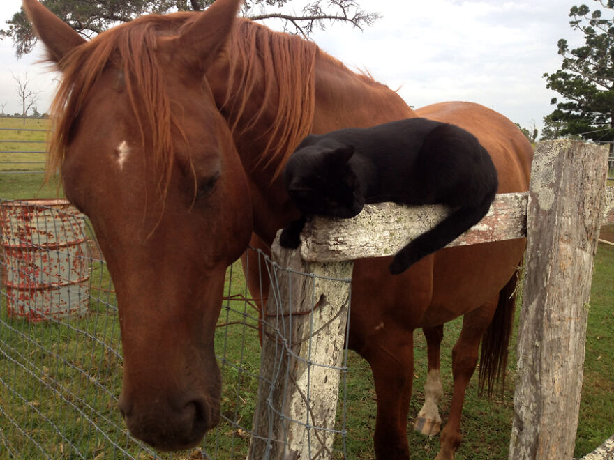 My Cat And Horse Have Been Best Friends For The Last 7 Years, Here Are 22 Pics Of Them