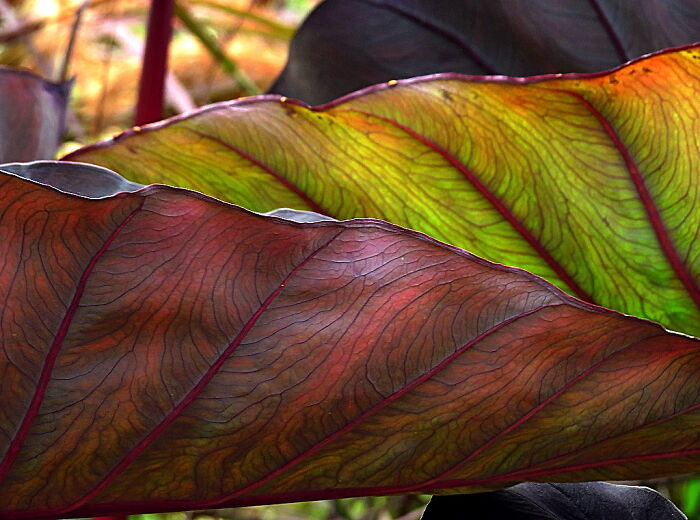 The Leaves Of An Exotic Plant