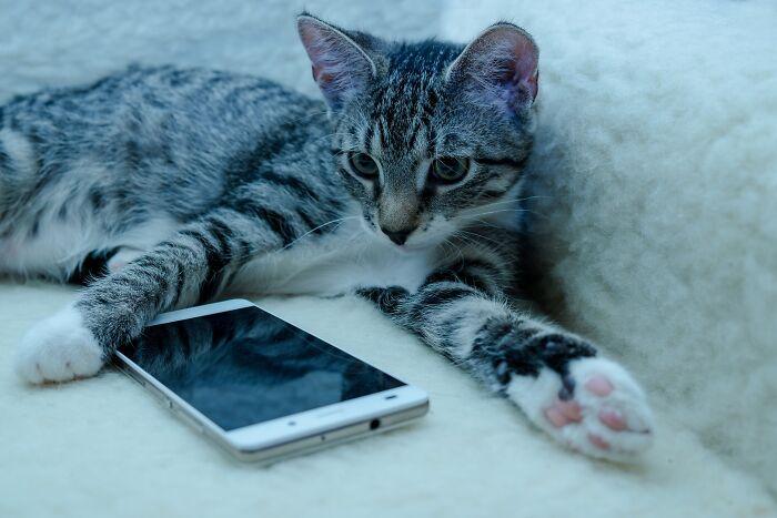 Ne razumijete šta vam mačka želi poručiti? Napravljena aplikacija koja prepoznaje mijakunje i prevodi ga na ljudski jezik!