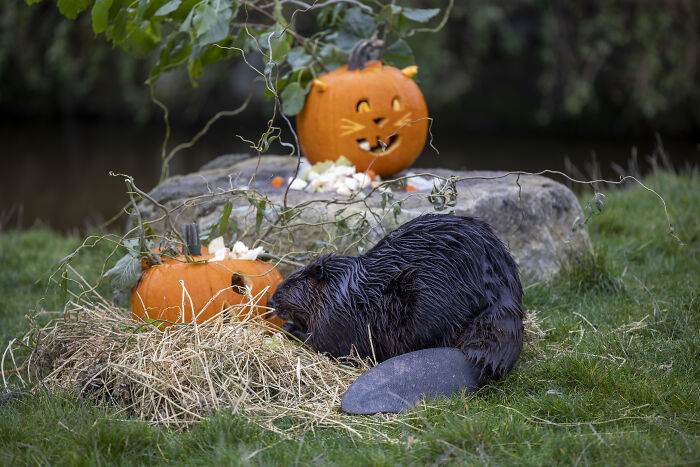 This Animal Park In Belgium Determined To Shock Its Animals With Halloween-Themed Treats