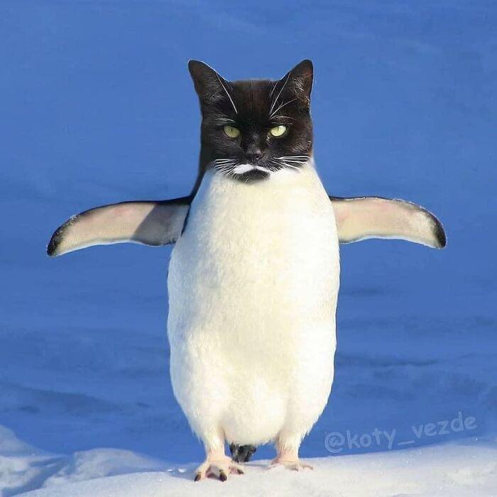 Animals-Photoshopped-Cats-Koty-Vezde-Galina-Bugaevskaya