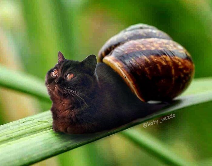 Cat Photoshop