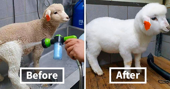 50 Times Things Were Completely Transformed By Cleaning Them (New Pics)